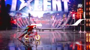 France has got Talent - Mark Steiger's parrot show