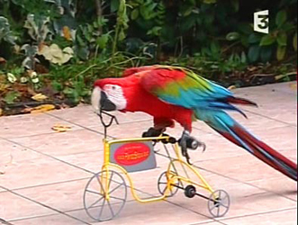 Parrot tricycle