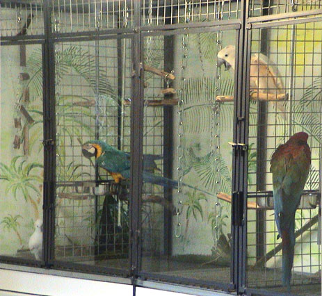 Parrot cages for Voliere exterieur perroquet